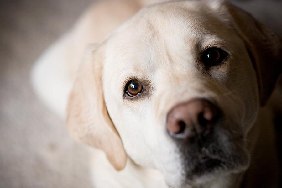 Благотворительный фонд помощи животным