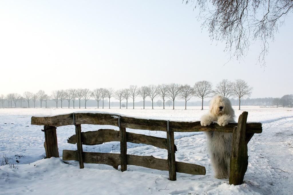 Правила прогулки с собакой зимой
